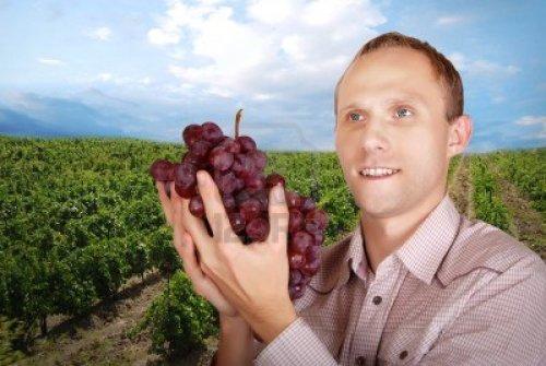 11151665-enologo-con-un-gran-ramo-de-uvas-oscuras-en-el-fondo-del-cielo-azul-de-vina-y