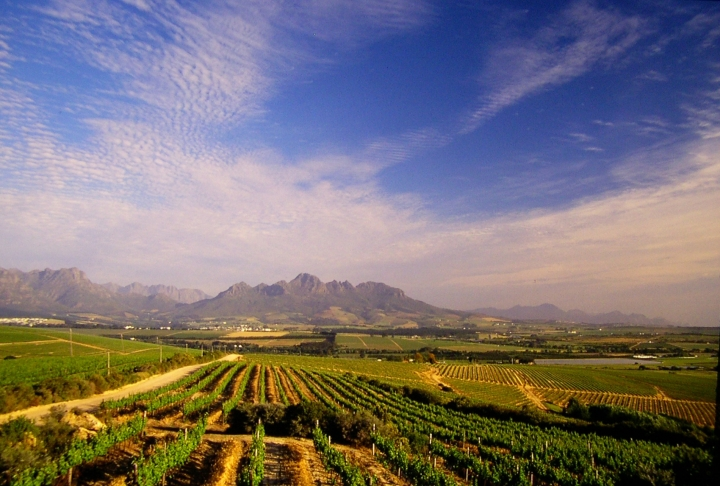 vineyards-with-simonsberg